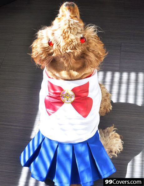sailor-dog