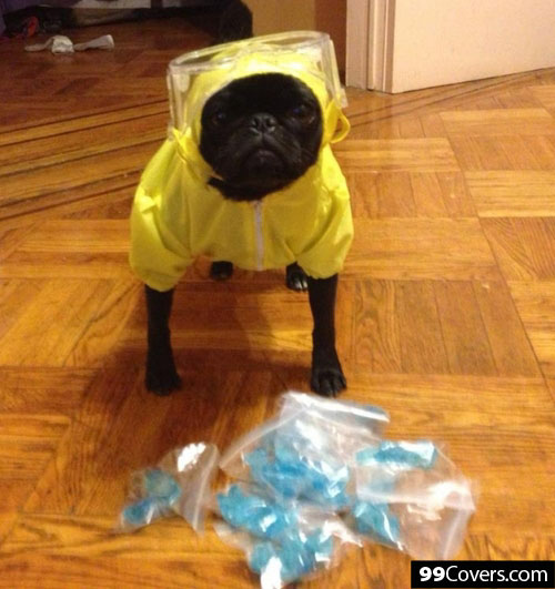 walter-white-dog