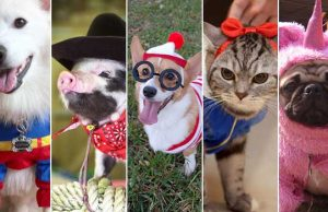 20 Cutest Pets in Clothes