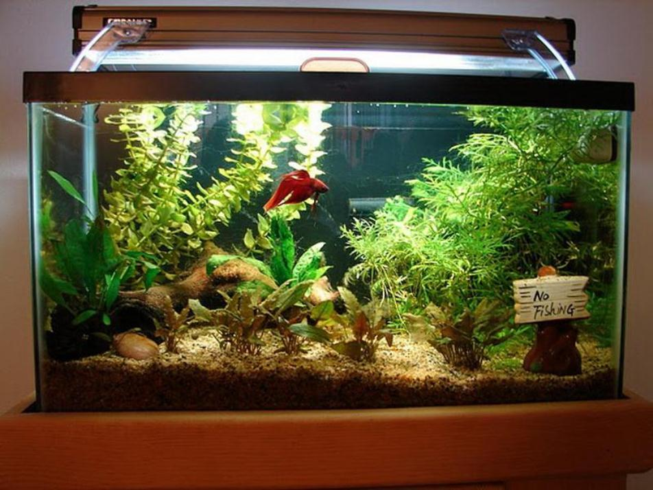 29-fish tank