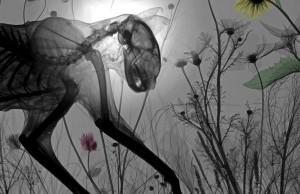 animal-x-rays