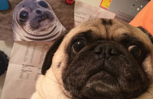 These Animal Selfies Are Way More Awesome Than Your Profile Picture And You Know It!