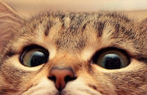 38 Things Only Cat Owners Will Understand.