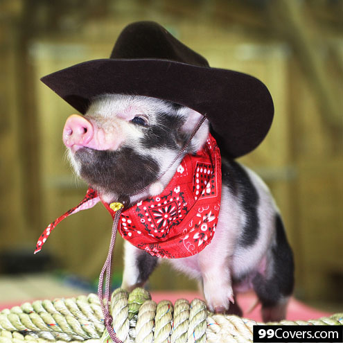 country-pig