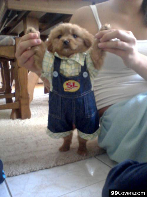 puppy-in-overalls
